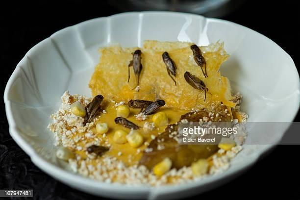 A starter dish 'Cremeux de mais fois gras et croustillant de grillons au sarrasin' = creamy corn with crickets' prepared by French chef David Faure...