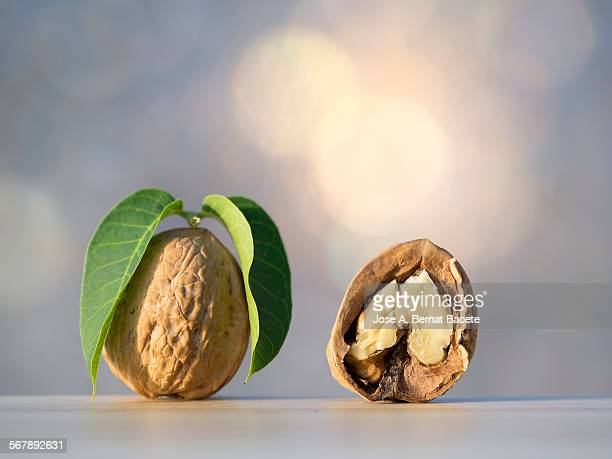 Starting walnut