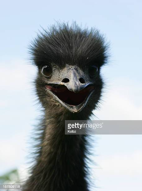 Startled Emu