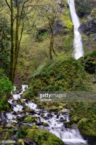 starvation creek ane waterfall - don smith stock pictures, royalty-free photos & images