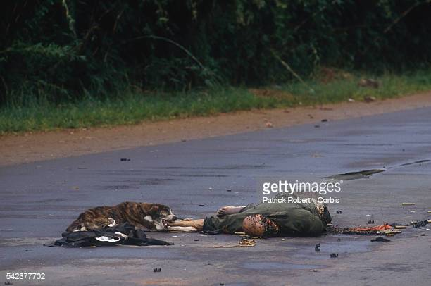 A starving dog gnaws on the arm of a rotting corpse a victim of the Liberian Civil War Responding to years of government corruption and oppression in...