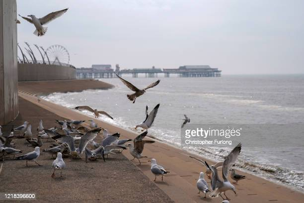 Starving seagulls are fed bread by a l ocal man near the deserted beach and promenade as people heed the official advice and stay home on Easter...