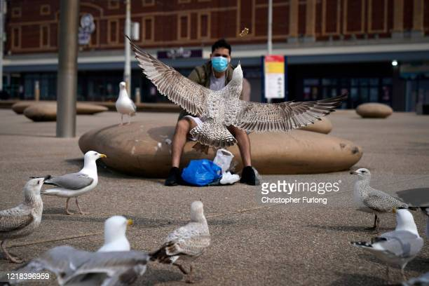 Starving seagulls are fed bread by a local man wearing a mask near the deserted beach and promenade as people heed the official advice and stay home...