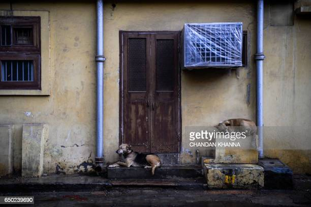 Stary dogs take shelter on the pavement outside a house during a rainfall in New Delhi on March 9 2017 / AFP PHOTO / CHANDAN KHANNA