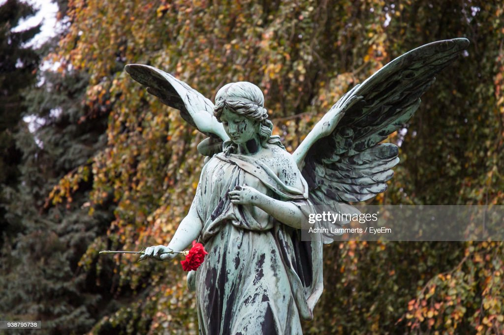 Statue Of Angel With Flower In Cemetery : Stock-Foto