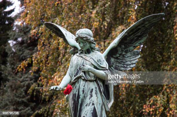 statue of angel with flower in cemetery - achim lammerts stock-fotos und bilder