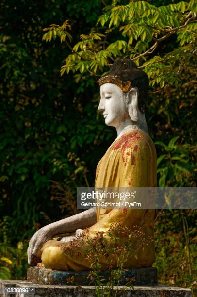 statue of buddha against plants - gerhard schimpf stock pictures, royalty-free photos & images