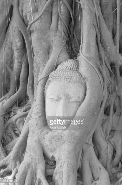Statue of Buddha in tree roots, Wat Phra Mahathat, Ayuthaya, Ayuthaya Province, Thailand