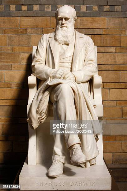 statue of charles darwin in natural history museum - statue stock pictures, royalty-free photos & images