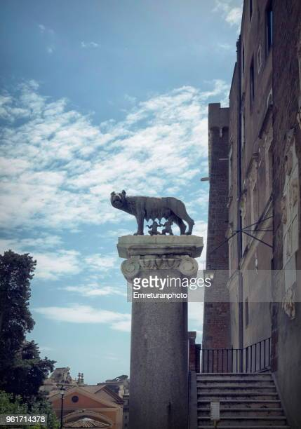 statue of the capitolino wolf near campidoglio square in rome - emreturanphoto stock pictures, royalty-free photos & images
