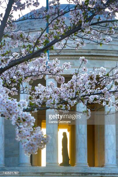 Statue of Thomas Jefferson in Jefferson Memorial with Cherry Blossoms, Washington, District of Columbia, USA