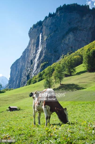 Staubbachfall in Lauterbrunnen im Berner Oberland - Schweiz
