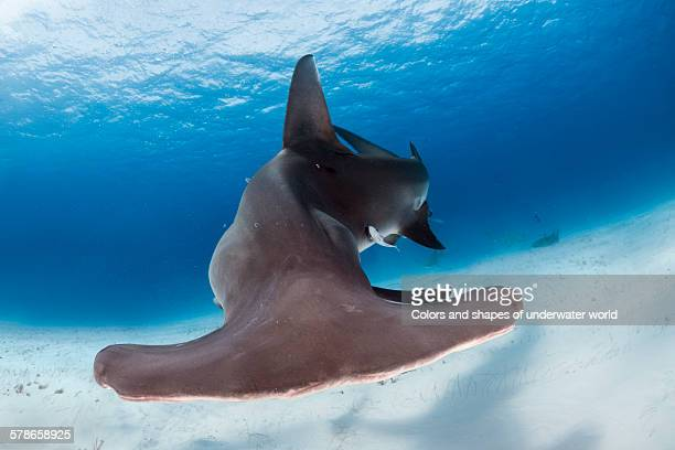 stay away - south bimini stock photos and pictures