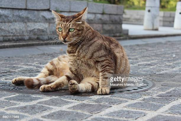 Stay Cat Sitting On Drainage