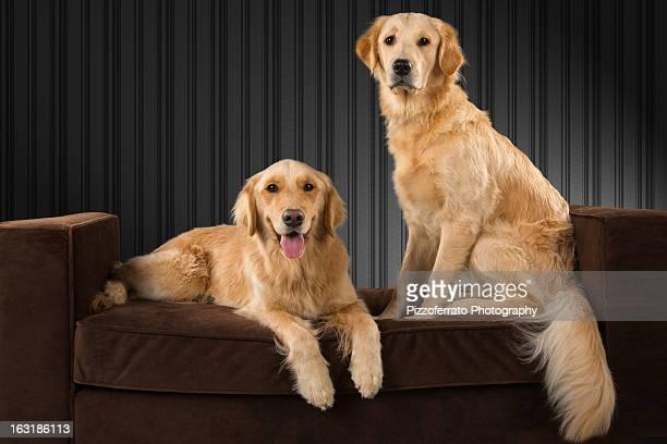 stay - due animali foto e immagini stock
