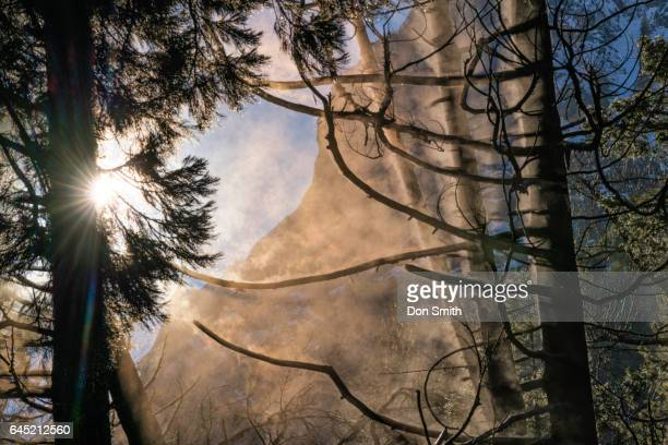 steam from trees - don smith stock pictures, royalty-free photos & images