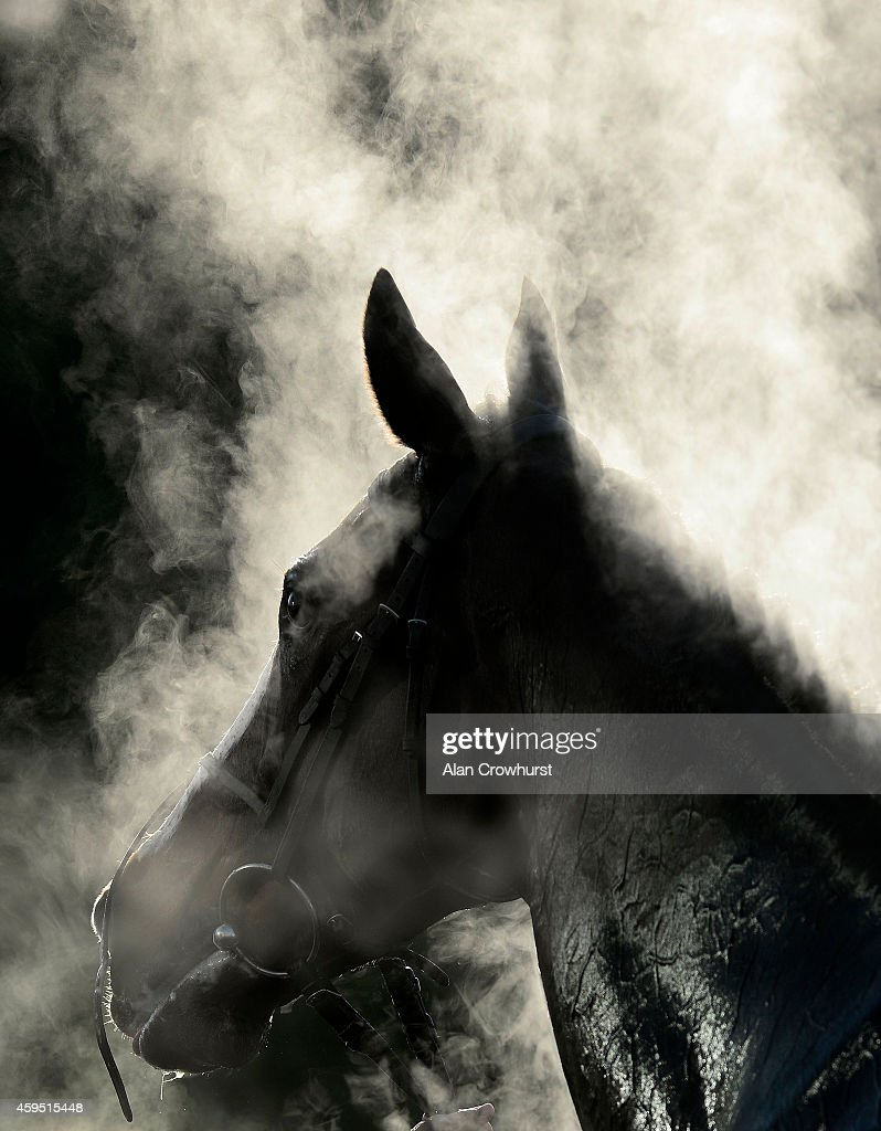 UNS: Global Sports Pictures of the Week - 2014, December 01