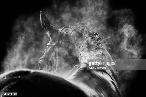 Steam rises from a runner having been hosed down after racing at Warwick Racecourse on December 13 2018 in Warwick England
