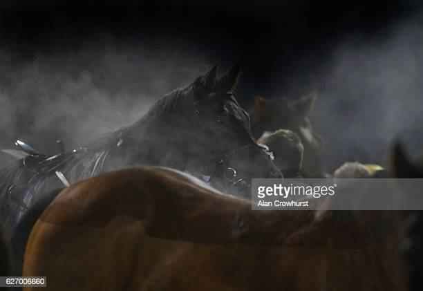 Steam rises from runners at Chelmsford racecourse on December 01 2016 in Chelmsford England