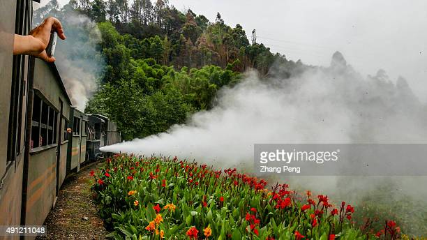 A steam train emitting white vapour drives through a valley dotted with wild flowers which has attracted a lot of tourists Jiayang steam train still...