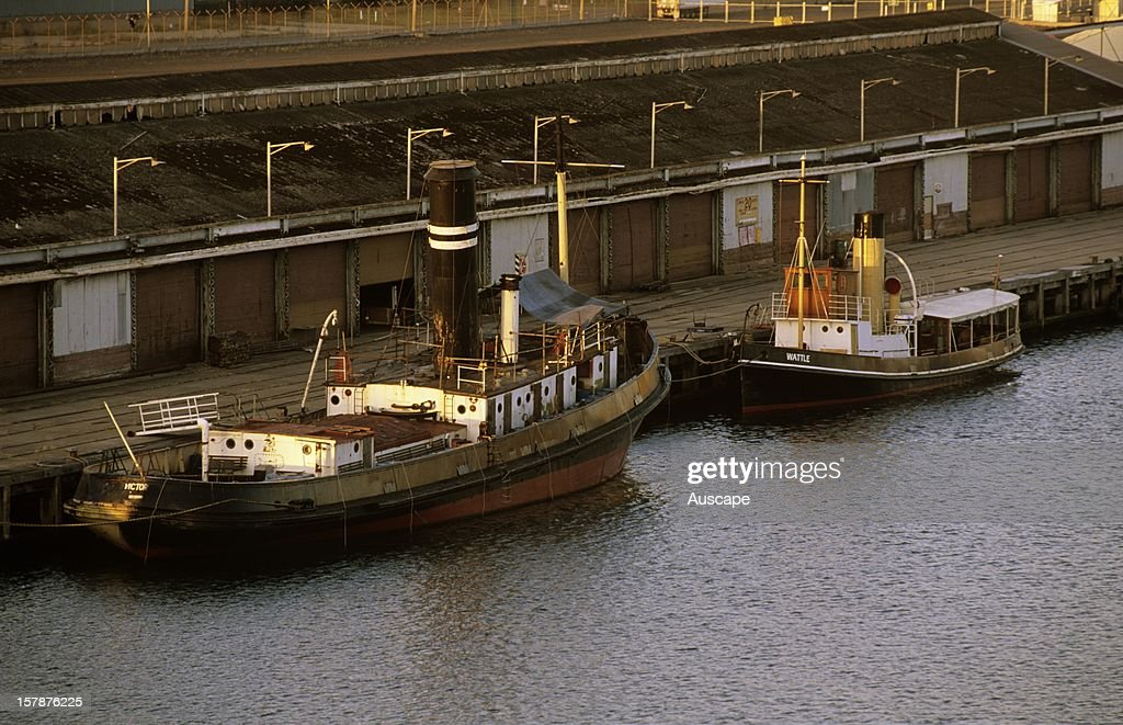 Steam tug boats including the 'Wattle' on right, one of only