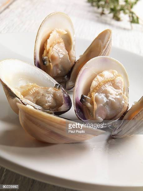 Steamed Middle Neck clams