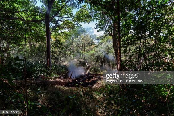 steaming fumaroles in the rainforest of the national park rincon de la vieja, parque nacional rincon de la vieja, province guanacaste, costa rica - guanacaste stock pictures, royalty-free photos & images