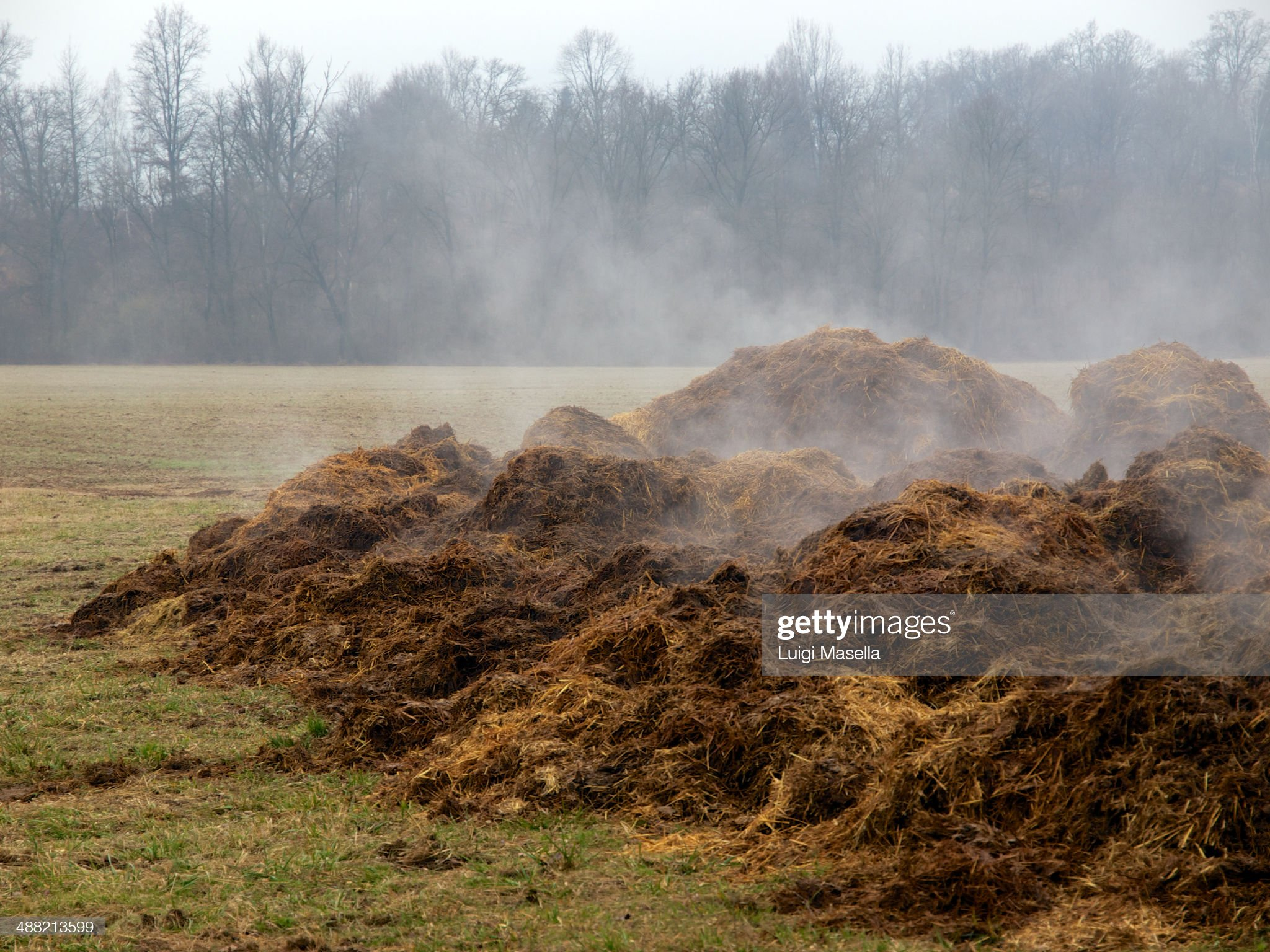 steaming-manure-picture-id488213599?s=20