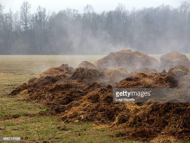 steaming manure - cacca foto e immagini stock