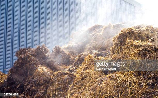 steaming pile of hay and cow manure in cowshed - lyn holly coorg stockfoto's en -beelden
