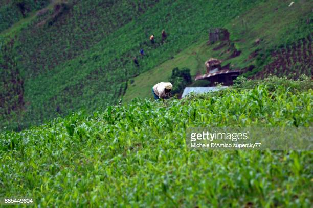 Steep green crops on the Rift Valley Escarpment