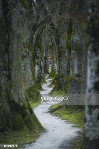 steindl-allee in holzkirchen at autumn - avenue stock pictures, royalty-free photos & images