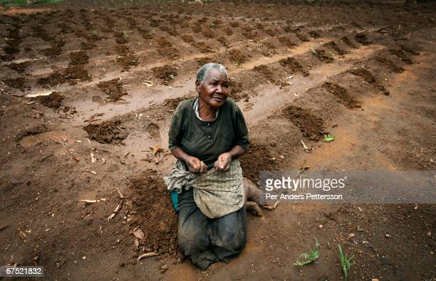 Stelia Kunje age 82 sits in her maize field with a few grains that she has left to plant on November 10 2005 in Galufu Malawi Stelia doesn't have...