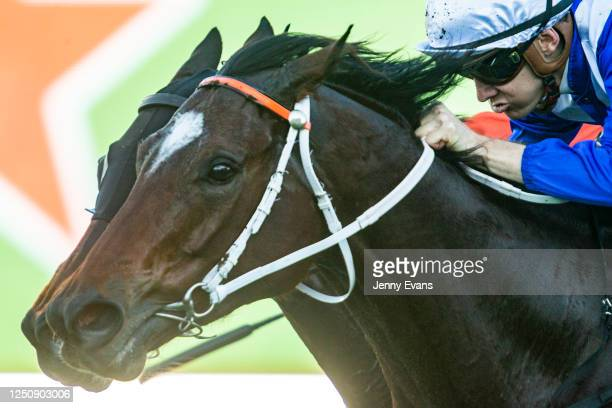 Stella Sea Sun ridden by Jason Collett wins race 6 the Heineken 3 Handicap during Sydney Racing at Royal Randwick Racecourse on June 20, 2020 in...