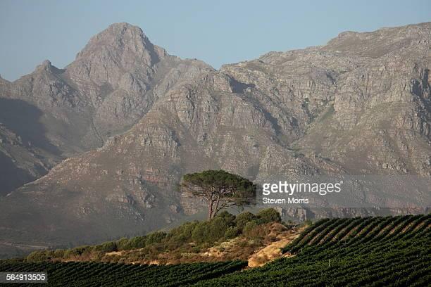 Stellenbosch - mountains & vineyards