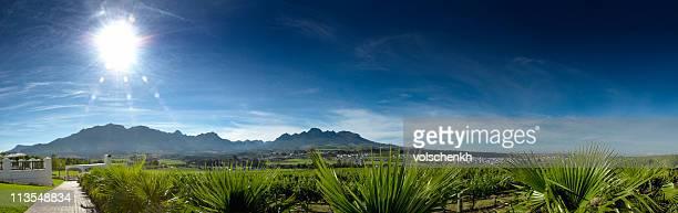 Stellenbosch panorama II