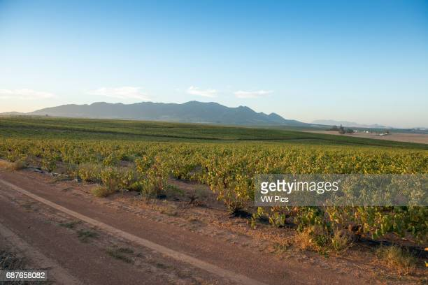 Stellenbosch South Africa South African farm land and vineyards
