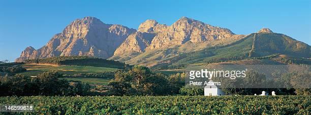 Stellenbosch Vineyard, Cape Province, South Africa