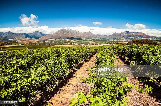 Vignobles, Stellenbosch