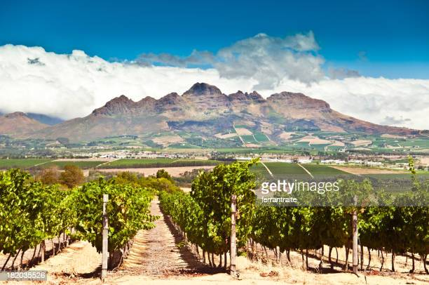 stellenbosch vineyards - republik südafrika stock-fotos und bilder
