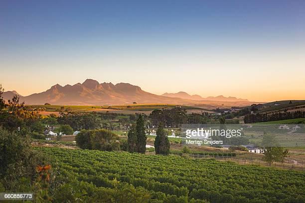 Stellenbosch vinyard landscape