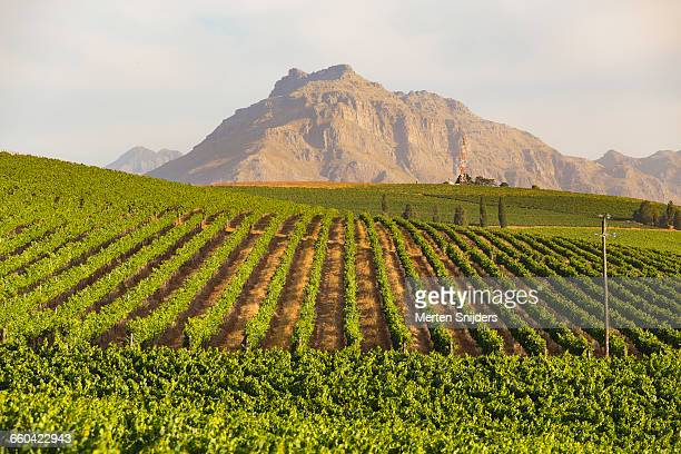 Stellenbosch vinyards and mountain