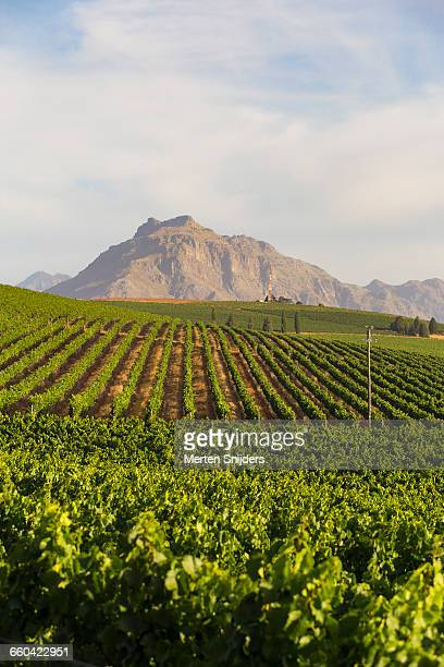 Stellenbosch vinyards and mountain