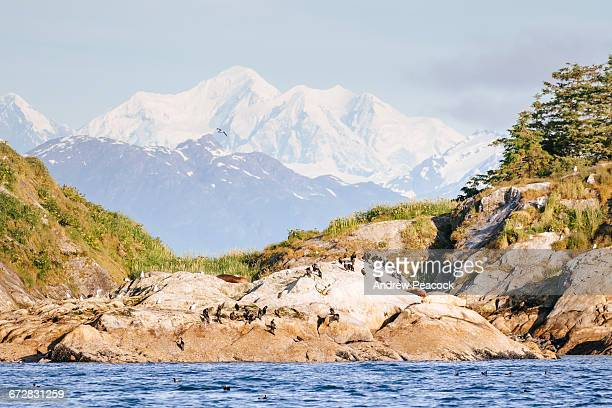 Steller sea lions on South Marble Island,