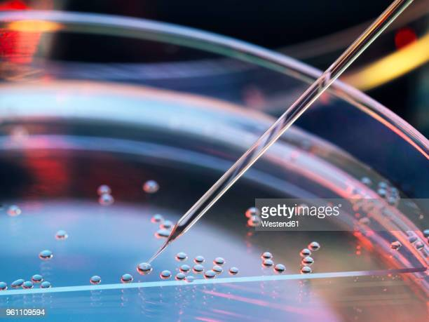 stem cell research, nuclear transfer being carried out on several embryonic stem cells for cloning - medicijnen stockfoto's en -beelden