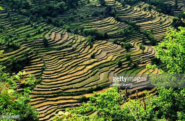 Step fields near Dalhousie, Himachal Pradesh