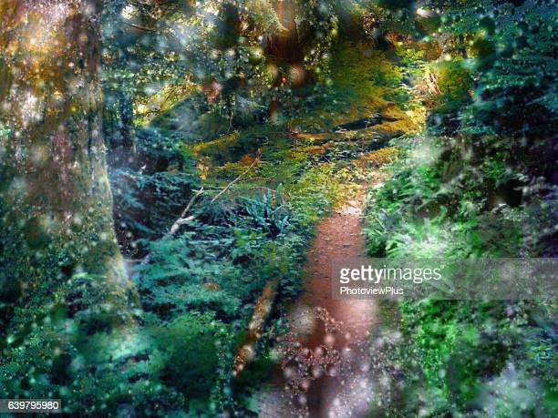 Step into Fairyland