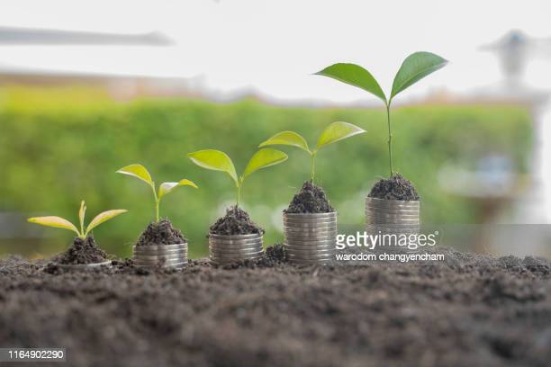 step of coins stacks with tree growing on top, nature background, money, saving and investment or money planning concept. - morality stock pictures, royalty-free photos & images