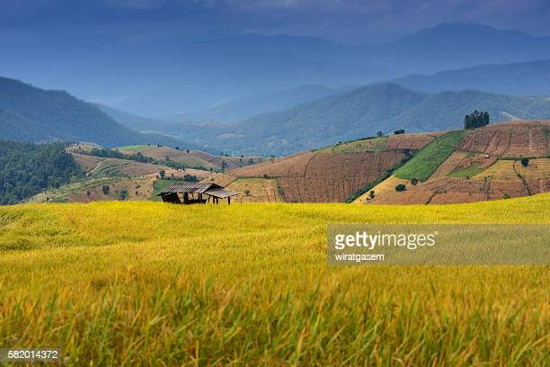 step of rice paddy field in chiangmai, thailand - wiratgasem stock photos and pictures