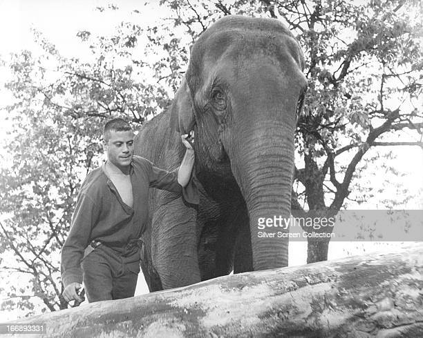 Stephen Brooks, played by English actor Oliver Reed leads Lucy the elephant in 'Hannibal Brooks', directed by Michael Winner, 1969.